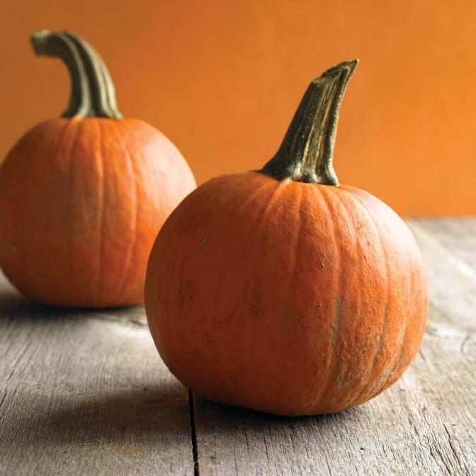 med103705_hal09_small_pumpkins_sq